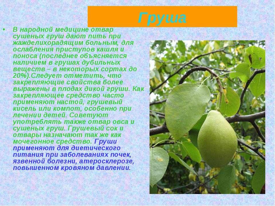 Груша В народной медицине отвар сушеных груш дают пить при жажделихорадящим б...