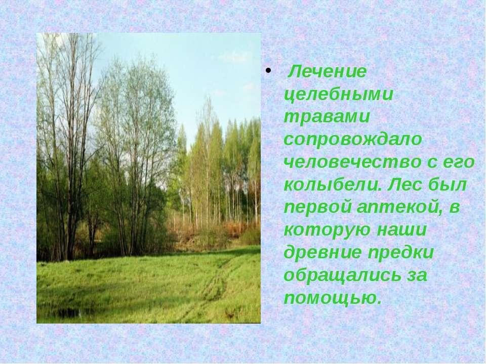 Лечение целебными травами сопровождало человечество с его колыбели. Лес был п...