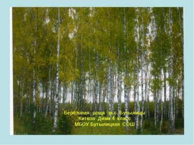 Берёзовая роща за с. Бутылицы Китков Дима 4 класс МБОУ Бутылицкая СОШ