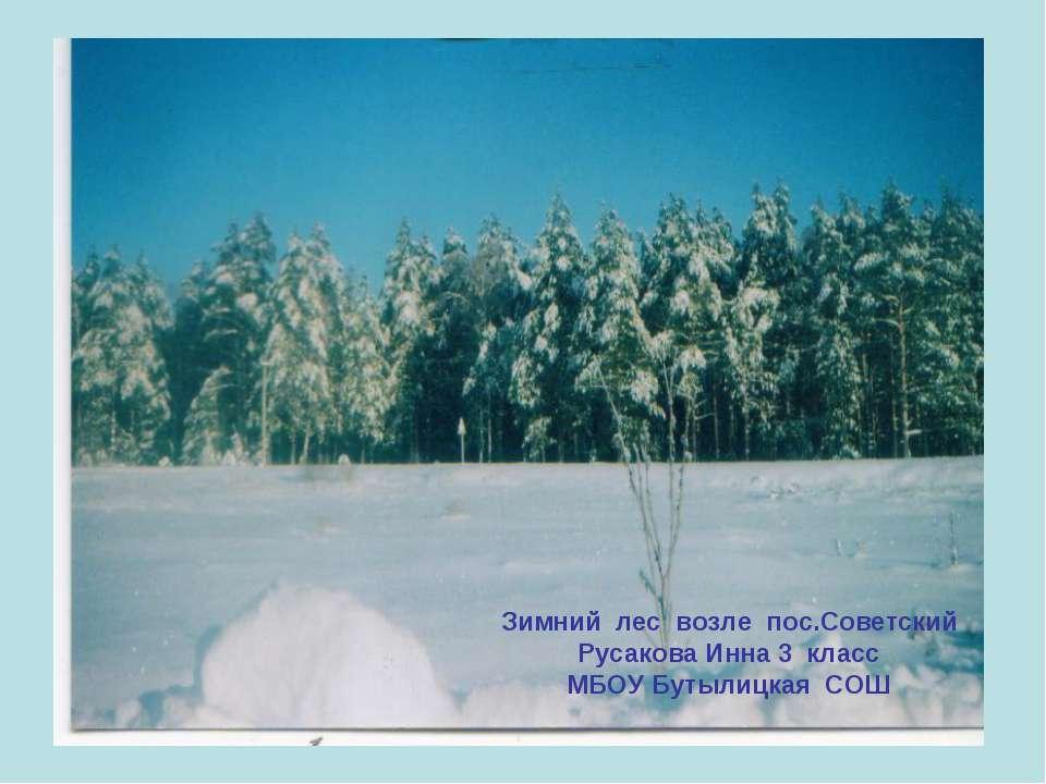 Зимний лес возле пос.Советский Русакова Инна 3 класс МБОУ Бутылицкая СОШ