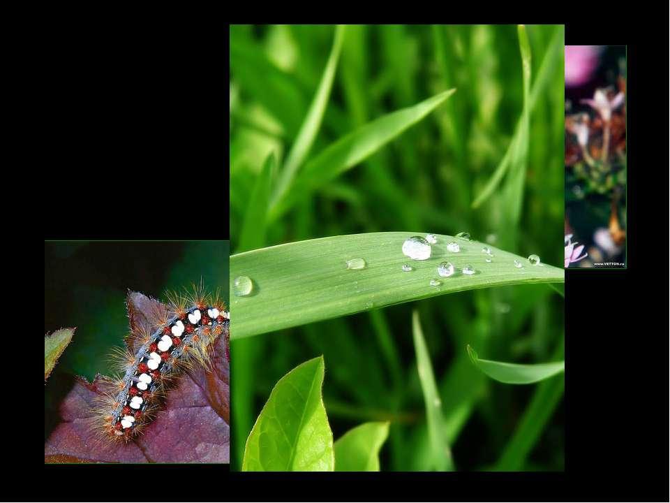 С какой целью Гусеница «погляделась в каплю росы»?