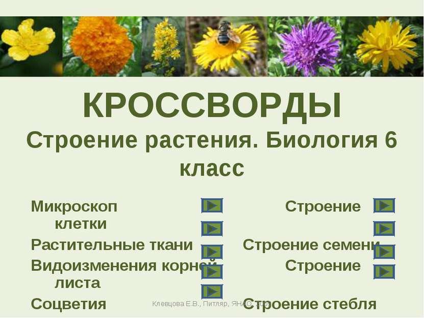 Кроссворды ботаника 6 класс