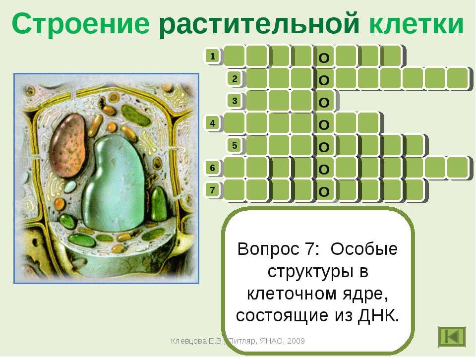 Кроссворды по биологии 6 класс бактерии
