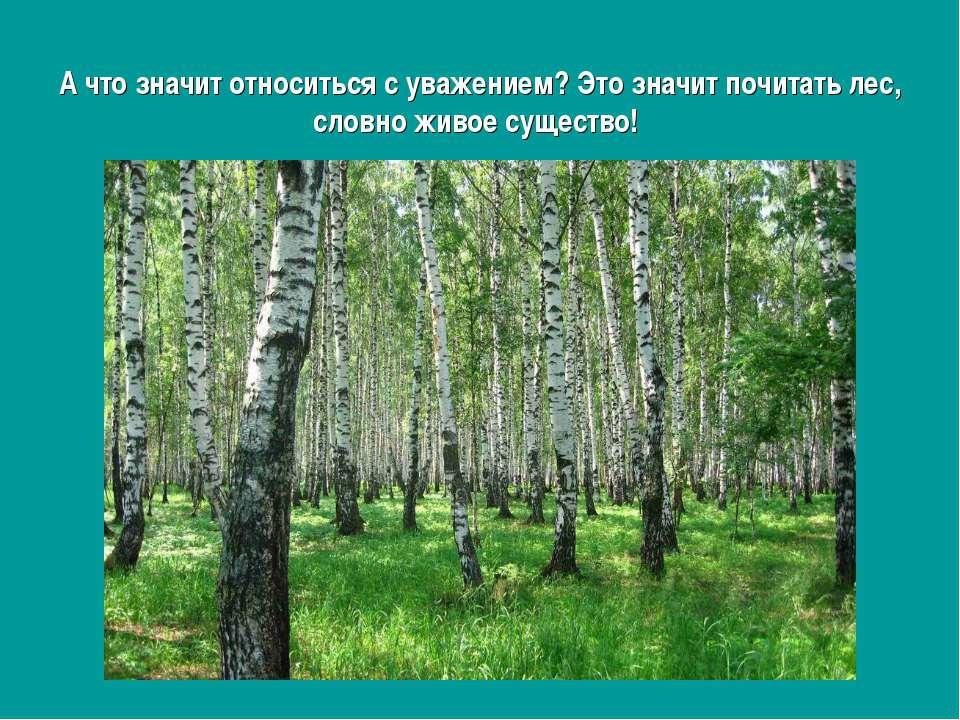 А что значит относиться с уважением? Это значит почитать лес, словно живое су...