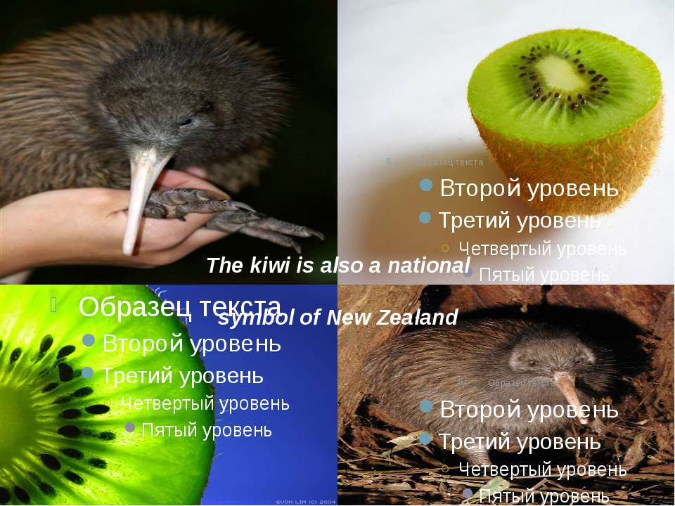 The kiwi is also a national symbol of New Zealand