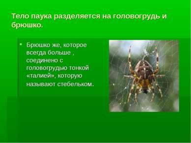 Тело паука разделяется на головогрудь и брюшко. Брюшко же, которое всегда бол...