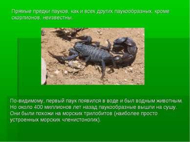 Прямые предки пауков, как и всех других паукообразных, кроме скорпионов, неиз...