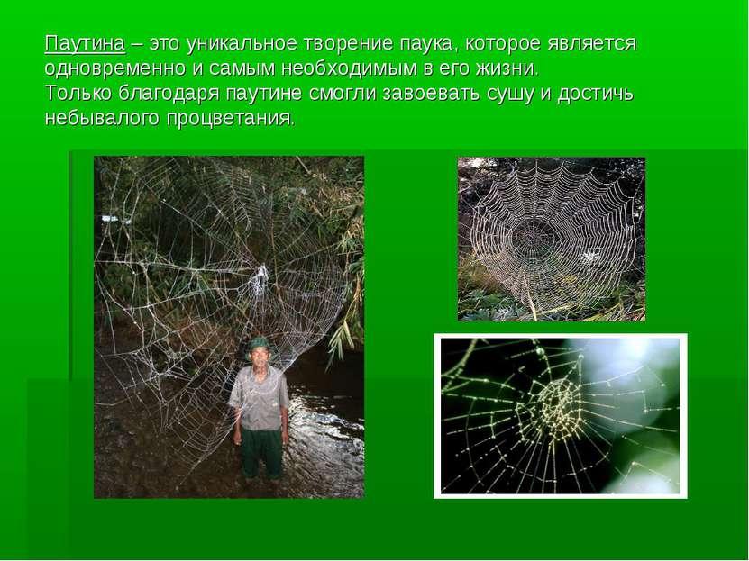 Паутина – это уникальное творение паука, которое является одновременно и самы...