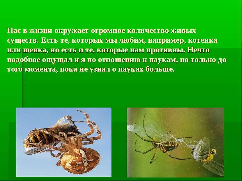 Нас в жизни окружает огромное количество живых существ. Есть те, которых мы л...