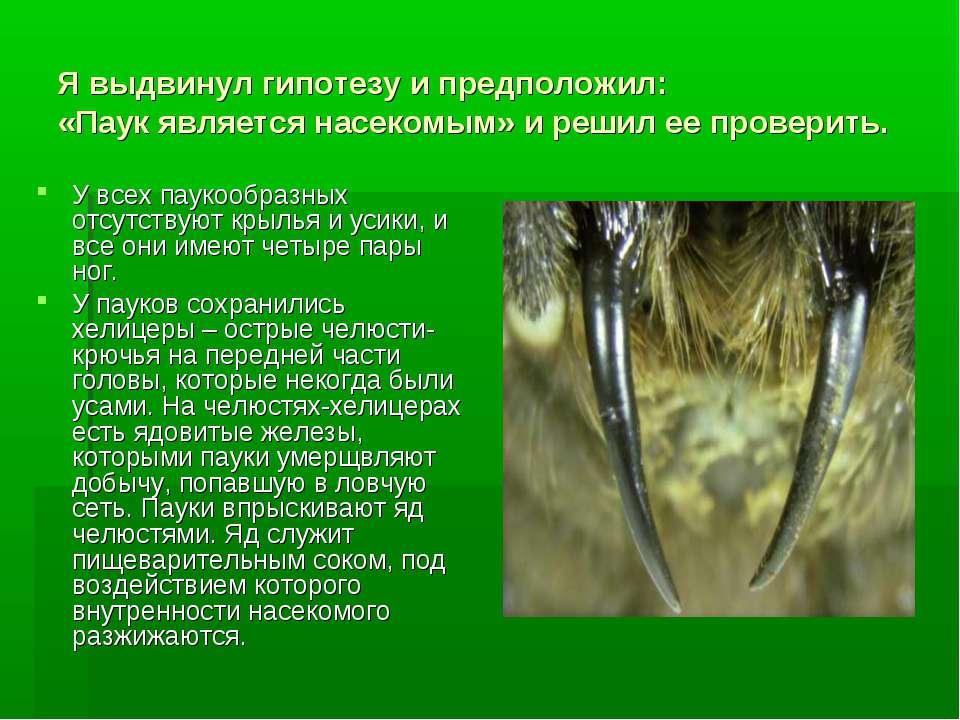 Я выдвинул гипотезу и предположил: «Паук является насекомым» и решил ее прове...