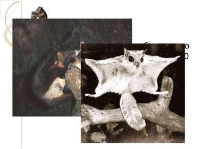 Расстояние от гнезда белочки до орешника 600 м. Белочка прошла 500 м. Во скол...