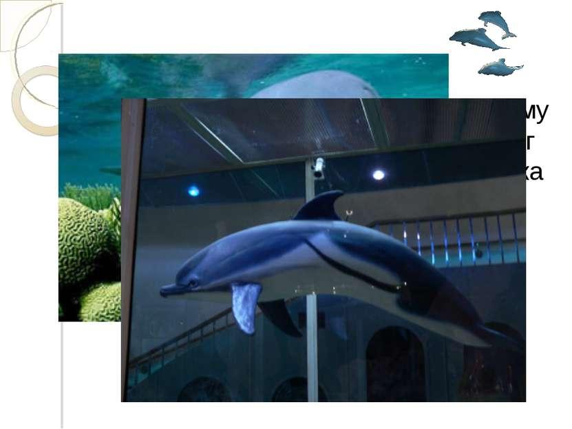 Длина дельфина 3 м 60 см. Чему равна его масса, если она на 1400 кг меньше, ч...