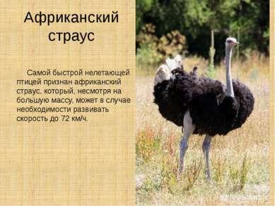 Африканский страус Самой быстрой нелетающей птицей признан африканский страус...