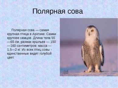 Полярная сова Полярная сова — самая крупная птица в Арктике. Самки крупнее са...