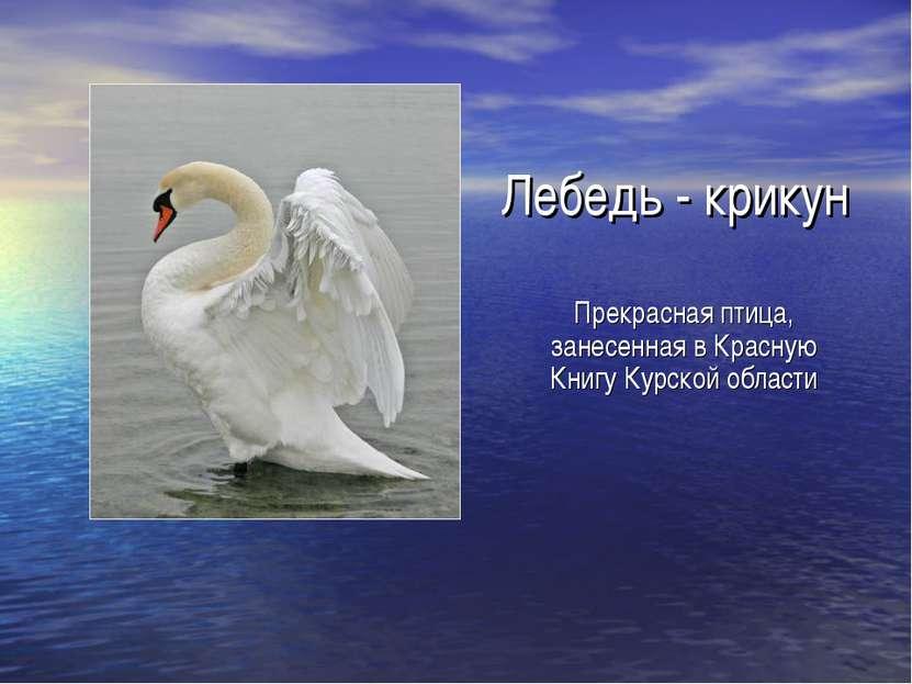 Лебедь - крикун Прекрасная птица, занесенная в Красную Книгу Курской области