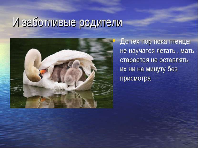 И заботливые родители До тех пор пока птенцы не научатся летать , мать старае...