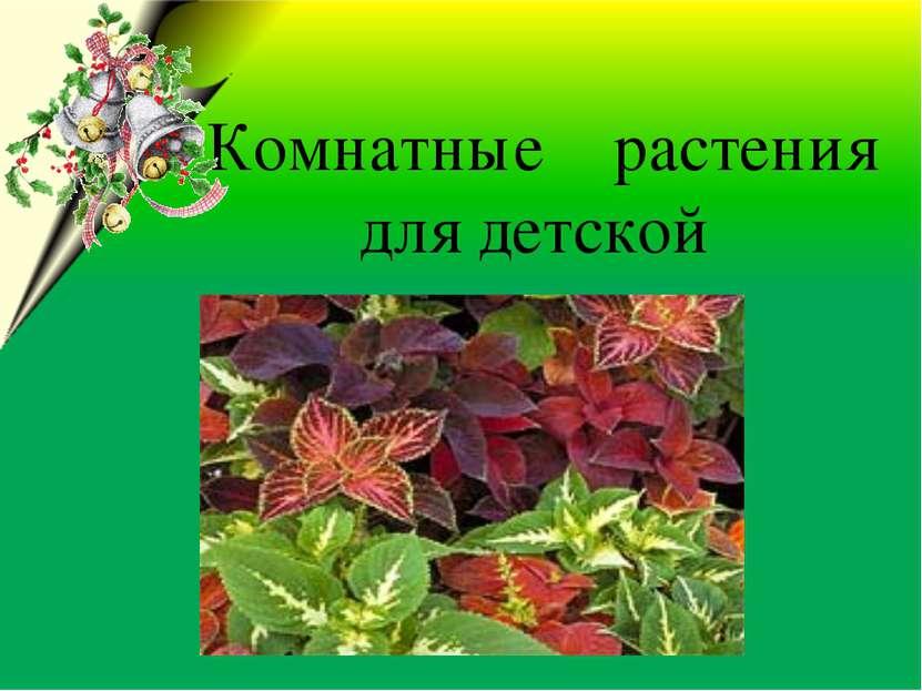 Комнатные растения для детской