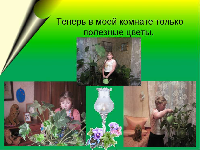 Теперь в моей комнате только полезные цветы.