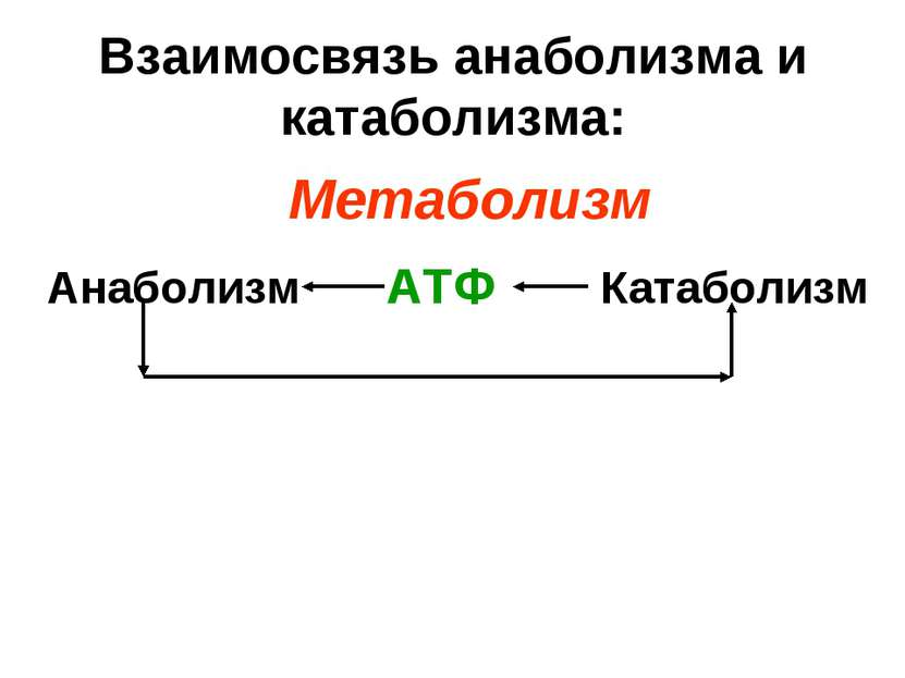 Взаимосвязь анаболизма и катаболизма: Анаболизм Катаболизм АТФ Метаболизм