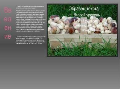 Введение Грибы - это питательный и богатый витаминами и минеральными вещества...