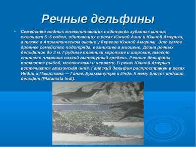 Речные дельфины Семейство водных млекопитающих подотряда зубатых китов; включ...