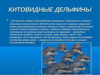 КИТОВИДНЫЕ ДЕЛЬФИНЫ Род морских зверей подсемейства дельфинов; отличаются тон...
