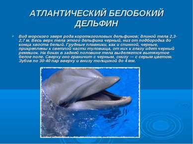 АТЛАНТИЧЕСКИЙ БЕЛОБОКИЙ ДЕЛЬФИН Вид морского зверя рода короткоголовых дельфи...