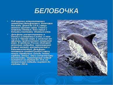 БЕЛОБОЧКА Род морских млекопитающих семейства дельфиновых; включает два вида....