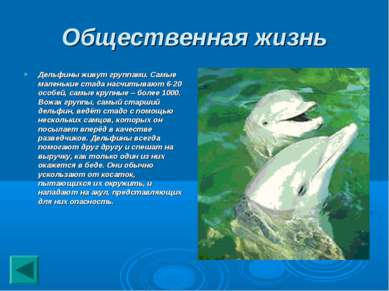 Общественная жизнь Дельфины живут группами. Самые маленькие стада насчитывают...