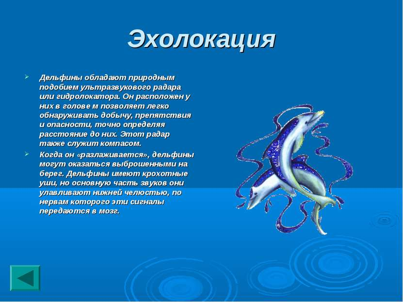 Эхолокация Дельфины обладают природным подобием ультразвукового радара или ги...