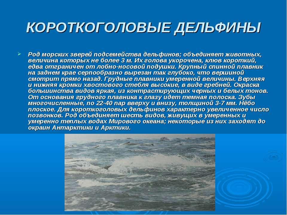 КОРОТКОГОЛОВЫЕ ДЕЛЬФИНЫ Род морских зверей подсемейства дельфинов; объединяет...