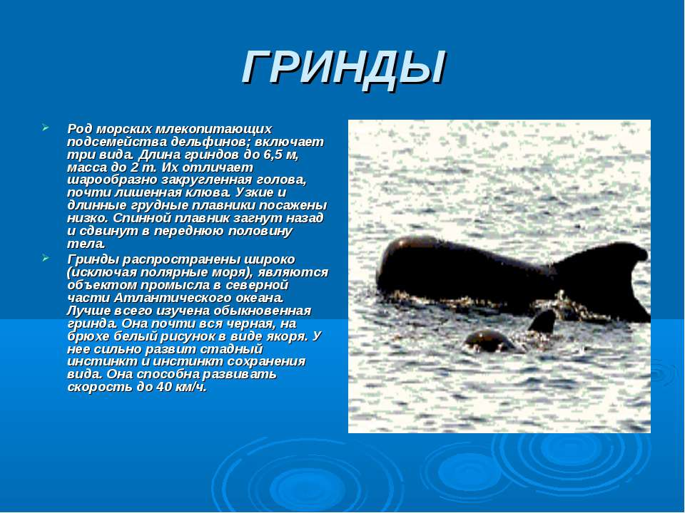 ГРИНДЫ Род морских млекопитающих подсемейства дельфинов; включает три вида. Д...