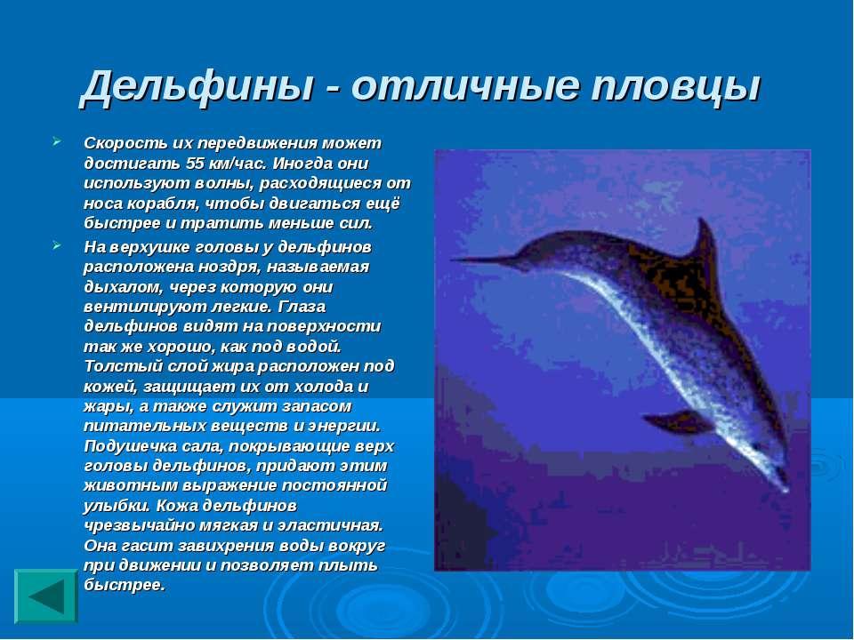 Дельфины - отличные пловцы Скорость их передвижения может достигать 55 км/час...
