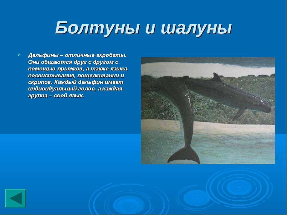 Болтуны и шалуны Дельфины – отличные акробаты. Они общаются друг с другом с п...