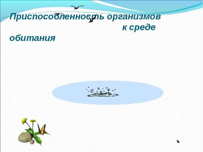 Приспособленность организмов к среде обитания