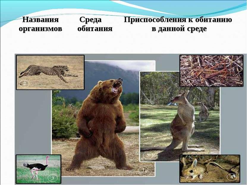 Названия организмов Среда обитания Приспособления к обитанию в данной среде
