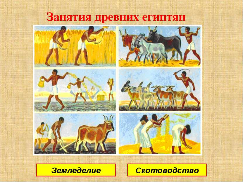 Занятия древних египтян Земледелие Скотоводство