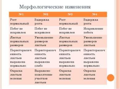 Морфологические изменения №1 №2 №3 №4 Рост нормальный Задержка роста Рост нор...