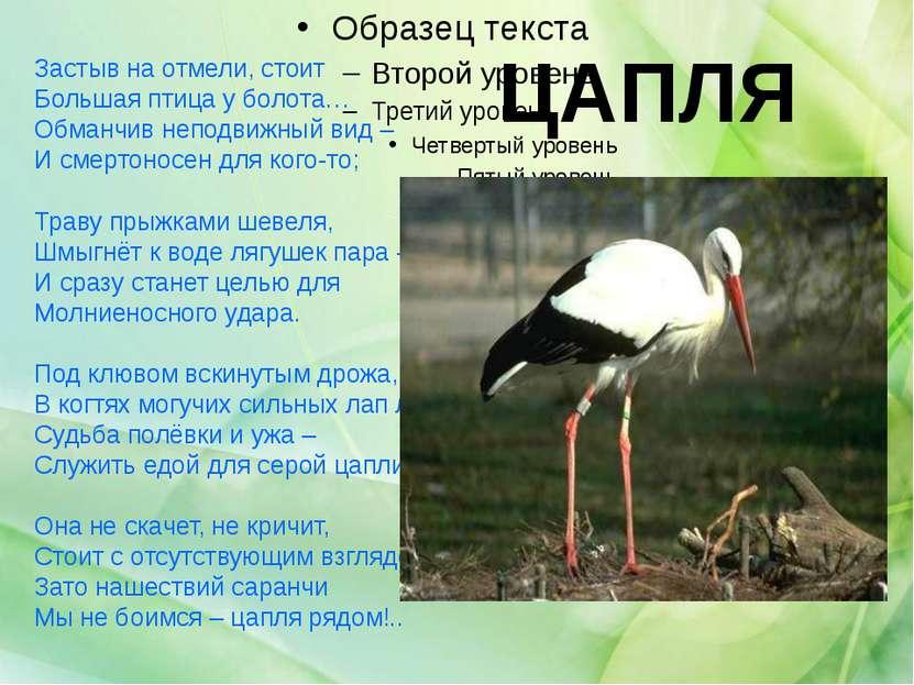 ЦАПЛЯ Застыв на отмели, стоит Большая птица у болота… Обманчив неподвижный ви...