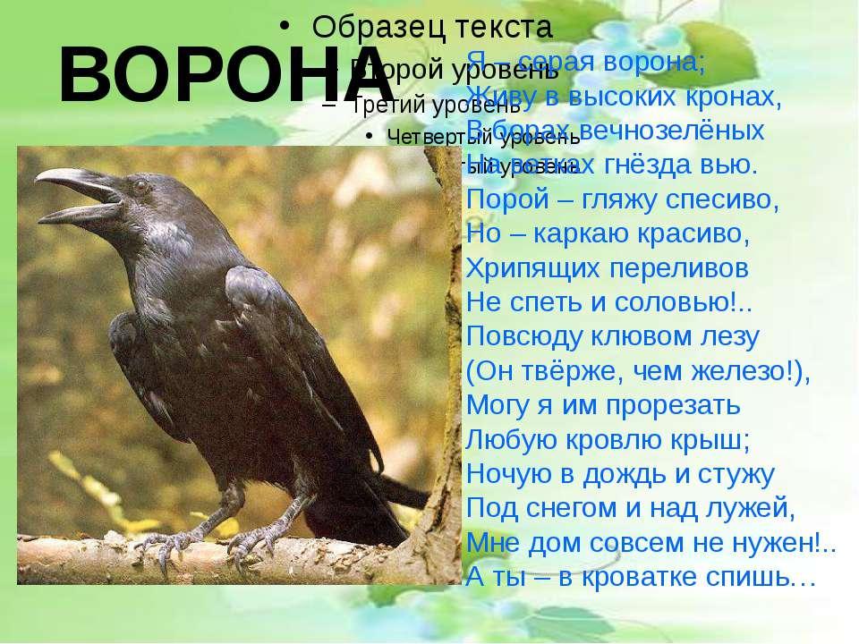 Я – серая ворона; Живу в высоких кронах, В борах вечнозелёных На ветках гнёзд...