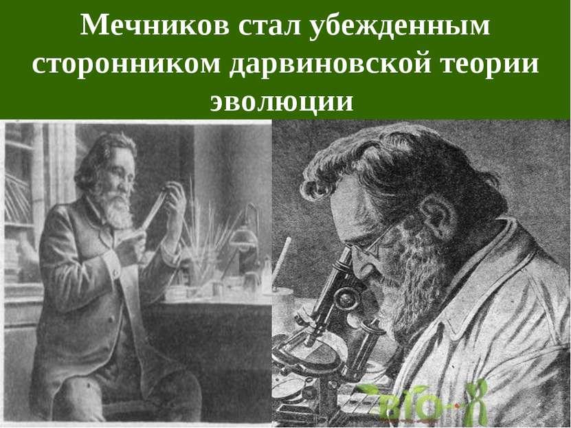 Мечников стал убежденным сторонником дарвиновской теории эволюции