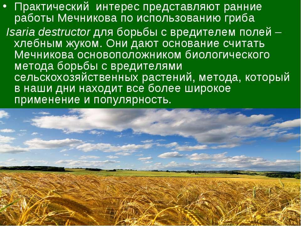 Практический интерес представляют ранние работы Мечниковапо использованиюг...