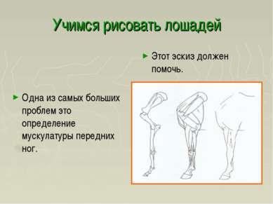 Учимся рисовать лошадей Одна из самых больших проблем это определение мускула...