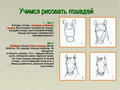 Учимся рисовать лошадей Шаг 3 Контуры готовы, начинаем добавлять детали. Все ...