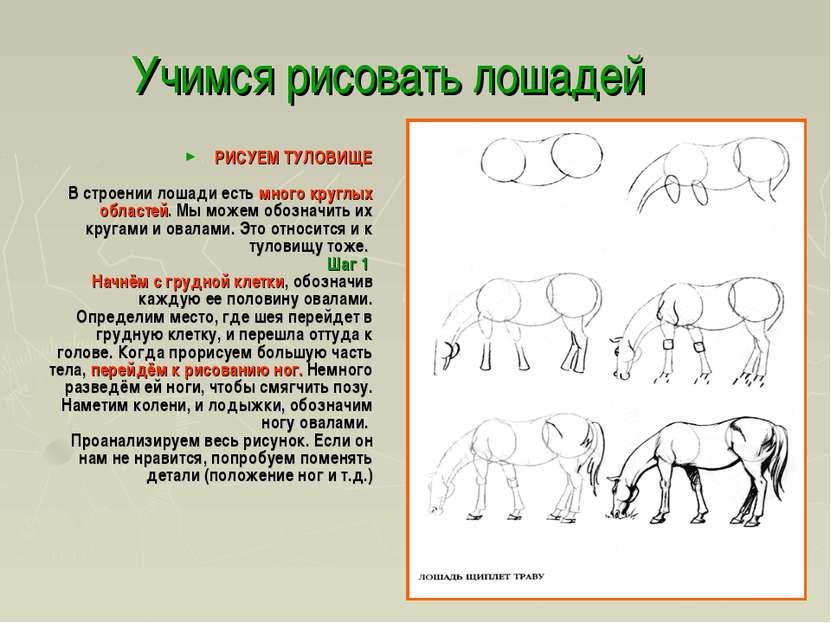 Учимся рисовать лошадей РИСУЕМ ТУЛОВИЩЕ В строении лошади есть много круглых ...