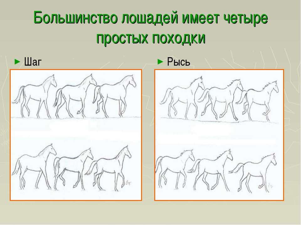 Большинство лошадей имеет четыре простых походки Шаг Рысь