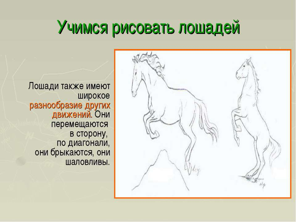 Учимся рисовать лошадей Лошади также имеют широкое разнообразие других движен...