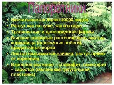 Насчитывается более 10000 видов Растут как на суше, так и в воде Травянистые ...