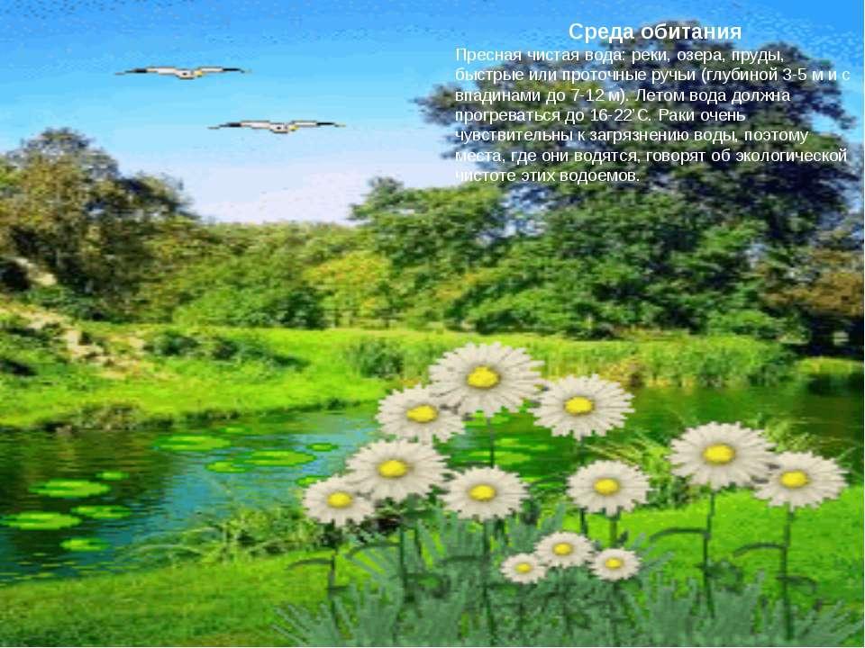 Среда обитания Пресная чистая вода: реки, озера, пруды, быстрые или проточные...