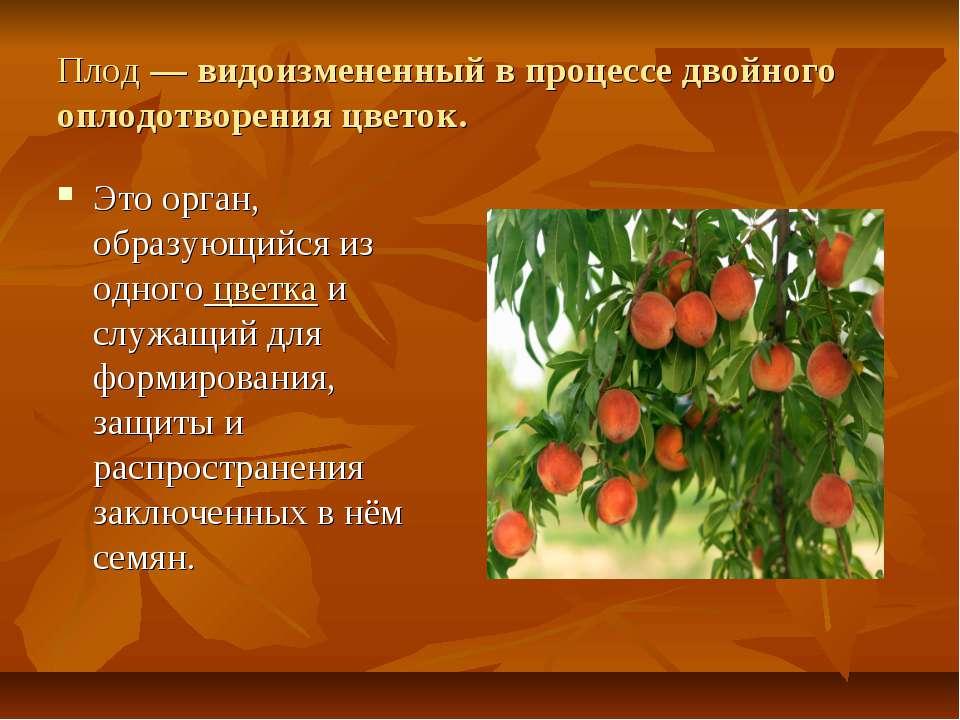 Плод— видоизмененный в процессе двойного оплодотворения цветок. Это орган, о...